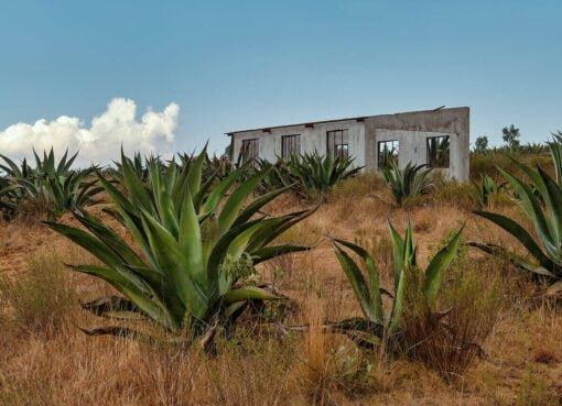 Pulque – Das Getränk der Götter aus Mexiko