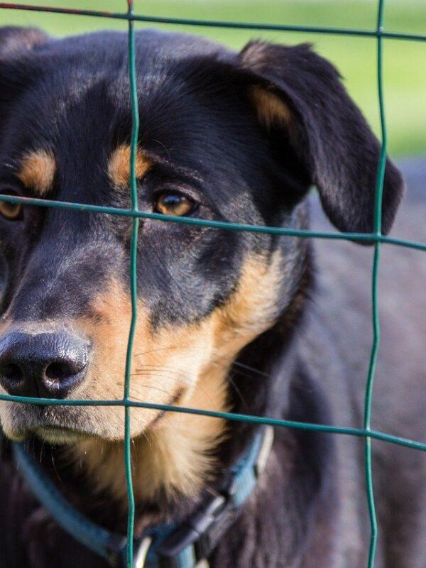Ist ein Zaun bei Hundehaltung Pflicht?