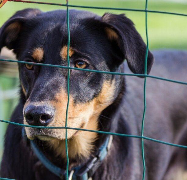 Zaun bei Hundehaltung Pflicht